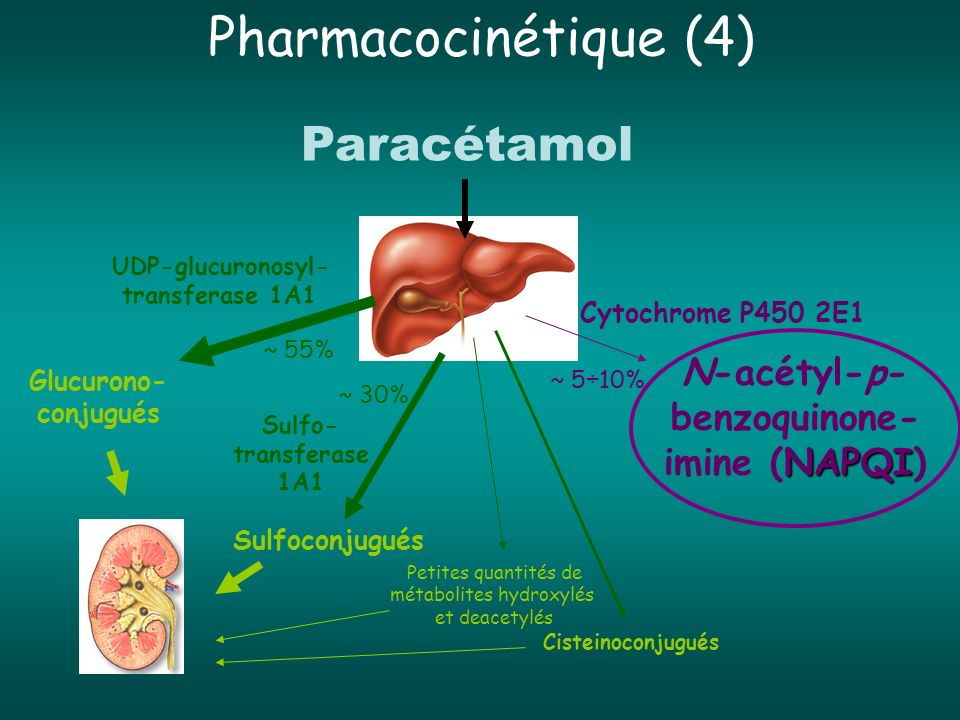 Pharmacocinétique (4) Paracétamol Cytochrome P450 2E1 UDP-glucuronosyl- transferase 1A1 Sulfo- transferase 1A1 N-acétyl-p- benzoquinone- NAPQI imine (