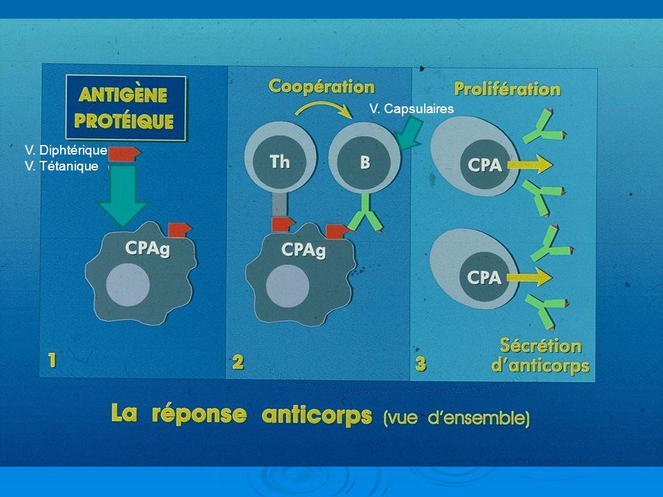 V. Diphtérique V. Tétanique V. Capsulaires