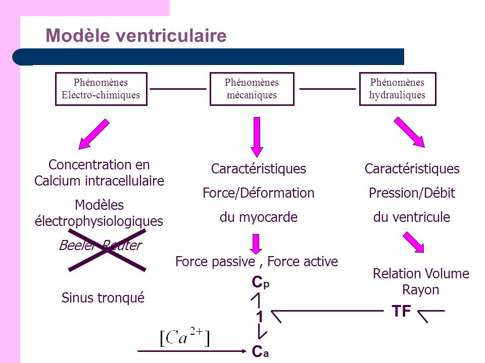 Modèle ventriculaire Phénomènes Electro-chimiques Phénomènes mécaniques Phénomènes hydrauliques Concentration en Calcium intracellulaire Modèles élect
