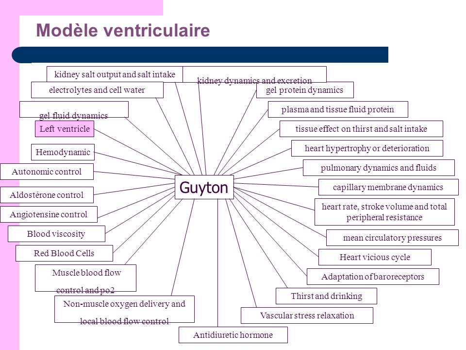Modèle ventriculaire Guyton Hemodynamic Autonomic control Aldostérone control Angiotensine control Blood viscosity Red Blood Cells Muscle blood flow c