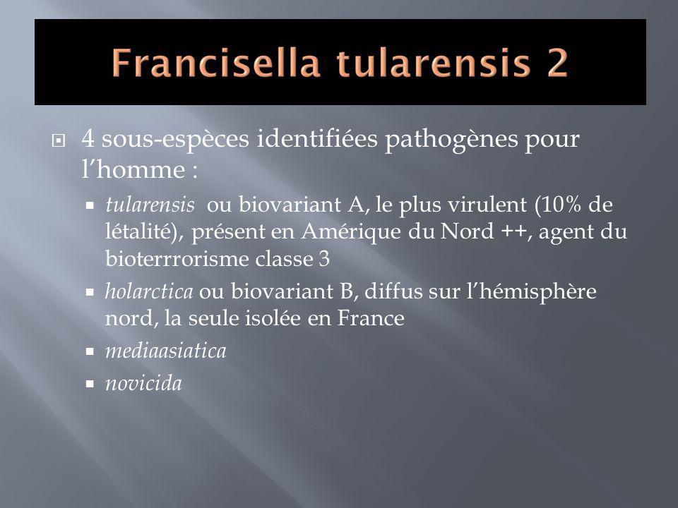 4 sous-espèces identifiées pathogènes pour lhomme : tularensis ou biovariant A, le plus virulent (10% de létalité), présent en Amérique du Nord ++, ag