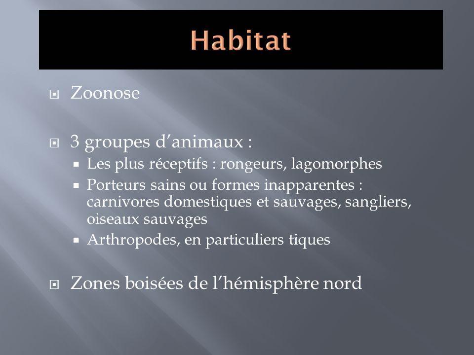 Zoonose 3 groupes danimaux : Les plus réceptifs : rongeurs, lagomorphes Porteurs sains ou formes inapparentes : carnivores domestiques et sauvages, sa
