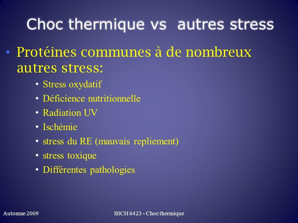 Choc thermique vs autres stress Protéines communes à de nombreux autres stress: Stress oxydatif Déficience nutritionnelle Radiation UV Ischémie stress
