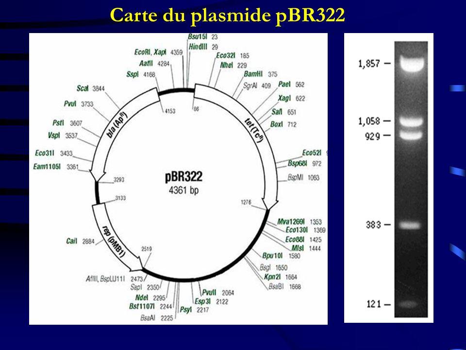 Carte du plasmide pBR322