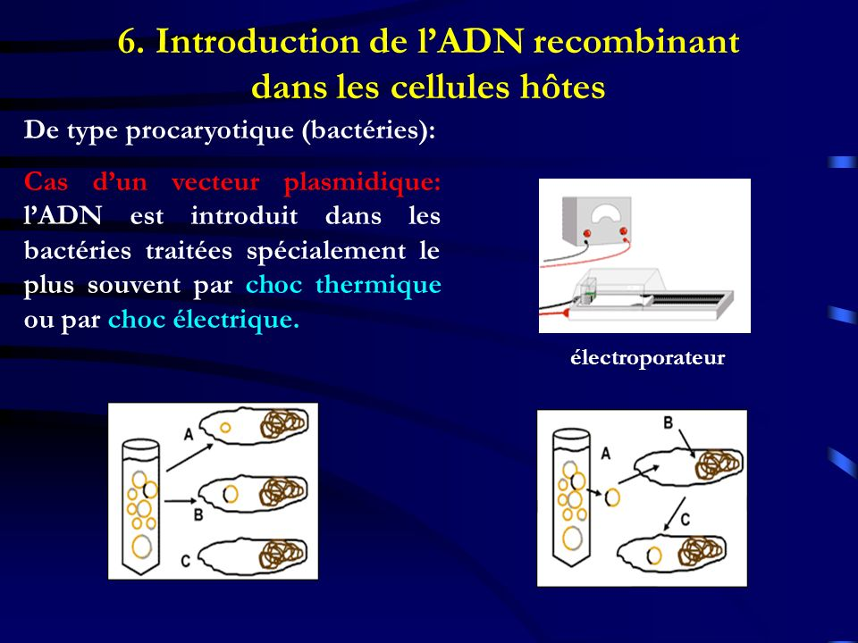 De type procaryotique (bactéries): Cas dun vecteur plasmidique: lADN est introduit dans les bactéries traitées spécialement le plus souvent par choc t