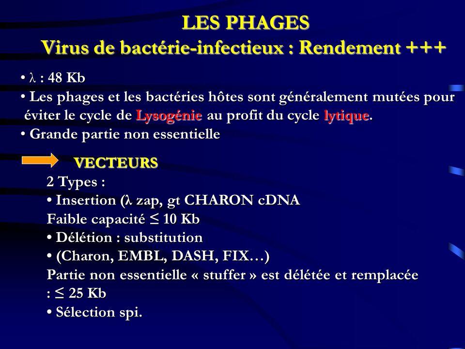 LES PHAGES Virus de bactérie-infectieux : Rendement +++ λ : 48 Kb λ : 48 Kb Les phages et les bactéries hôtes sont généralement mutées pour Les phages