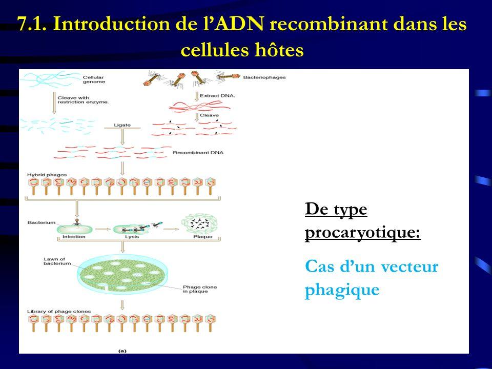 De type procaryotique: Cas dun vecteur phagique 7.1. Introduction de lADN recombinant dans les cellules hôtes