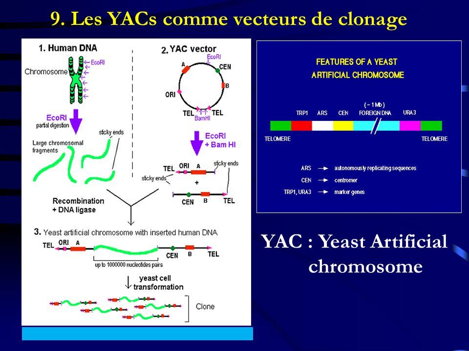 9. Les YACs comme vecteurs de clonage YAC : Yeast Artificial chromosome
