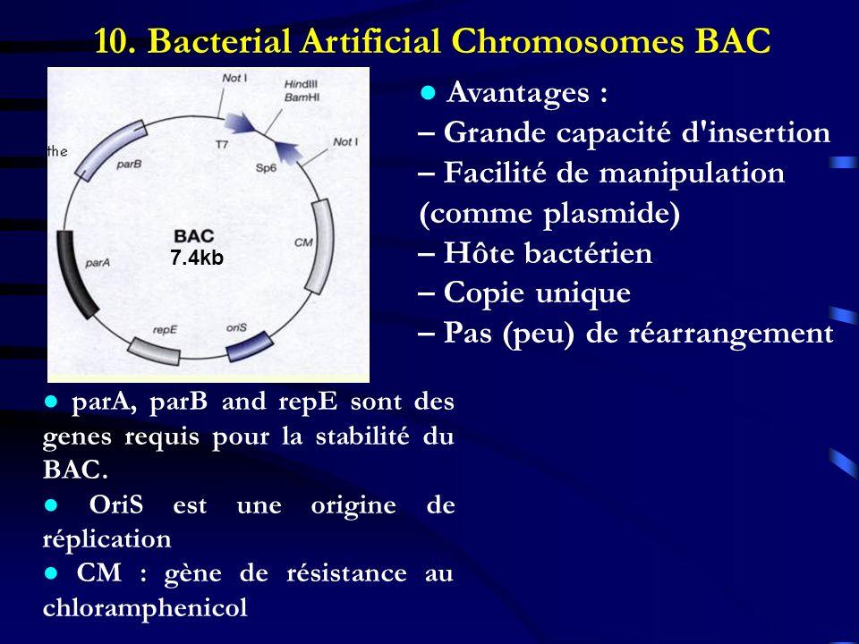 10. Bacterial Artificial Chromosomes BAC 7.4kb parA, parB and repE sont des genes requis pour la stabilité du BAC. OriS est une origine de réplication