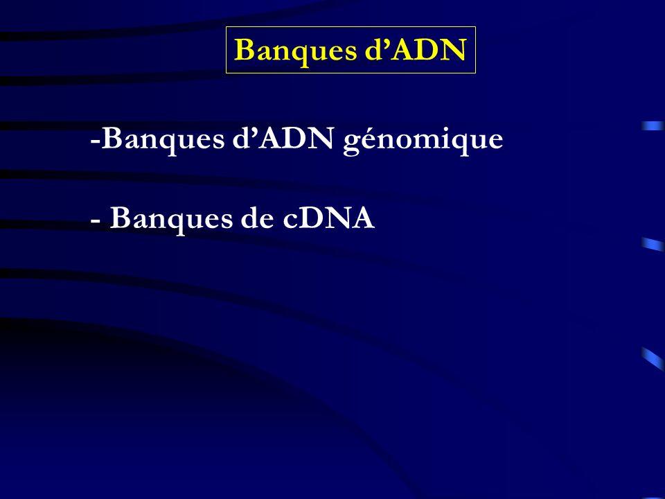 Banques dADN -Banques dADN génomique - Banques de cDNA