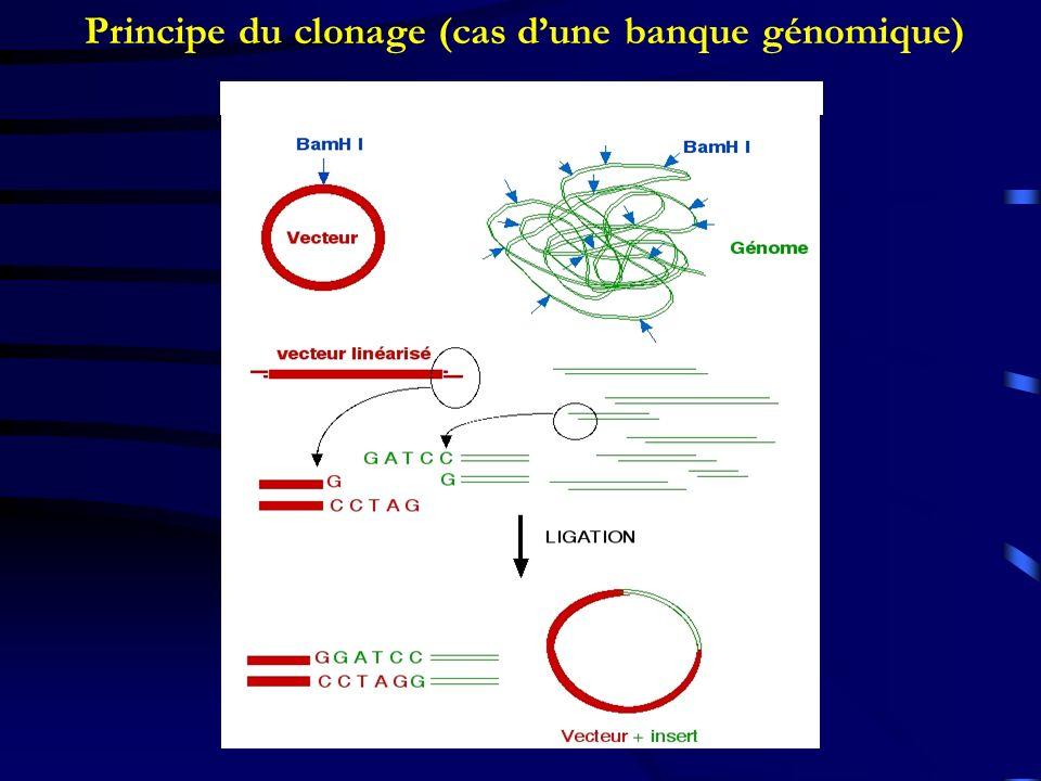 Principe du clonage (cas dune banque génomique)