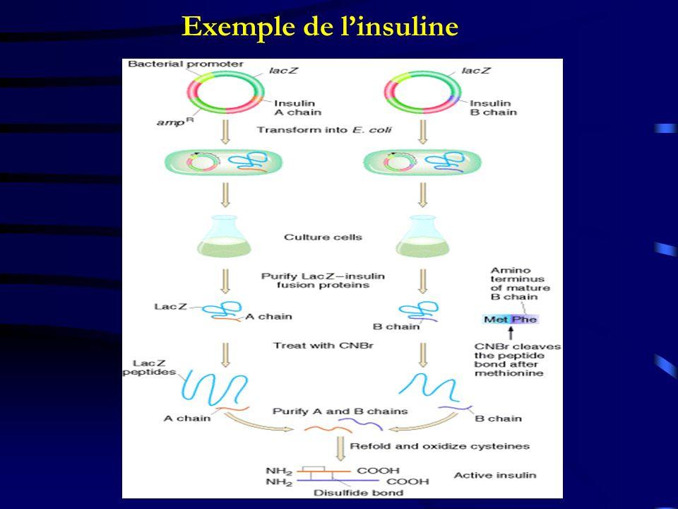 Exemple de linsuline
