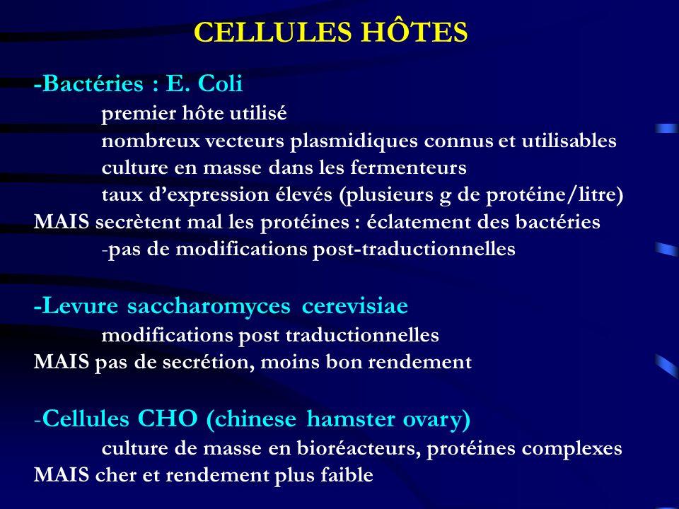 -Bactéries : E. Coli premier hôte utilisé nombreux vecteurs plasmidiques connus et utilisables culture en masse dans les fermenteurs taux dexpression