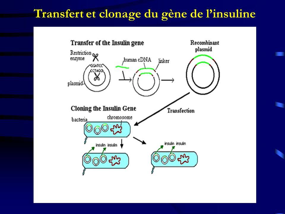 Transfert et clonage du gène de linsuline