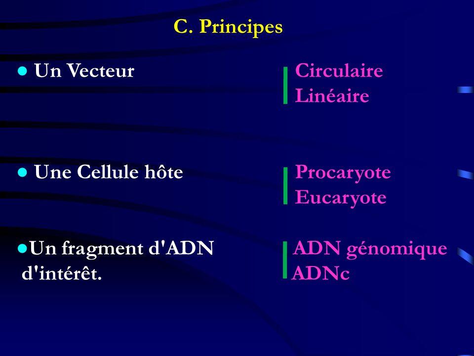 C. Principes Un Vecteur Circulaire Linéaire Une Cellule hôte Procaryote Eucaryote Un fragment d'ADN ADN génomique d'intérêt. ADNc