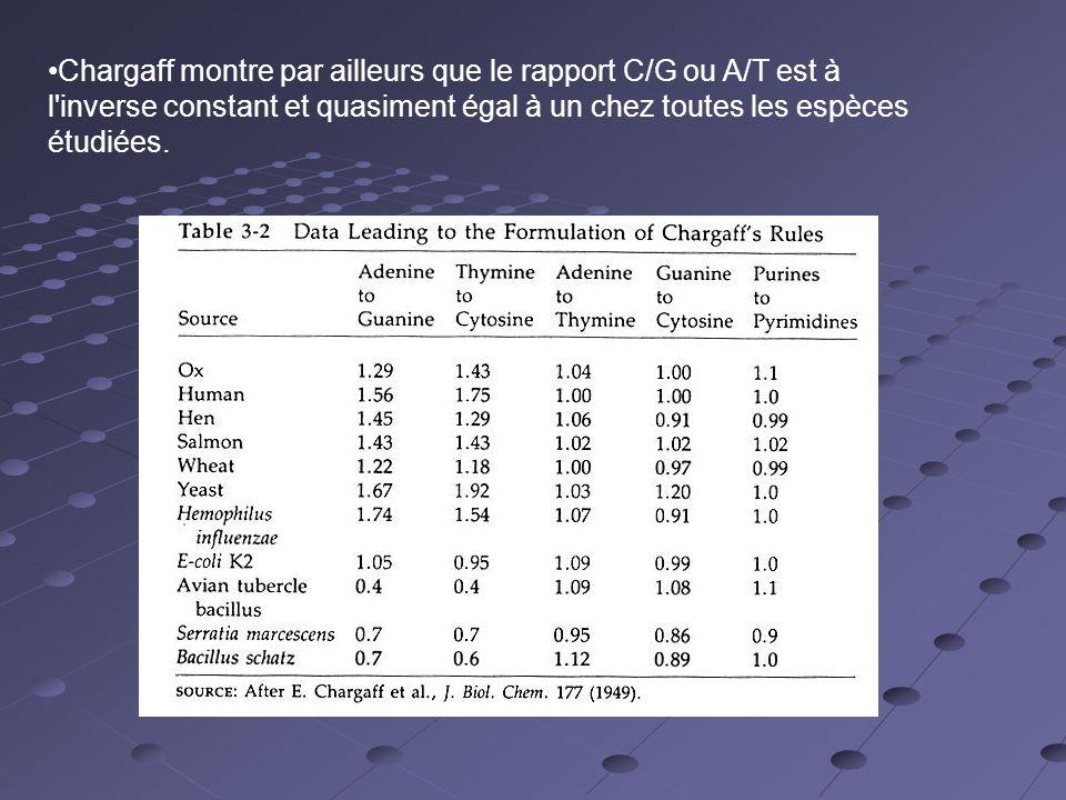 Chargaff montre par ailleurs que le rapport C/G ou A/T est à l inverse constant et quasiment égal à un chez toutes les espèces étudiées.