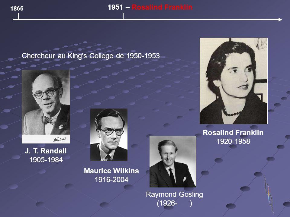 1866 1951 – Rosalind Franklin Rosalind Franklin 1920-1958 Chercheur au Kings College de 1950-1953 J. T. Randall 1905-1984 Maurice Wilkins 1916-2004 Ra
