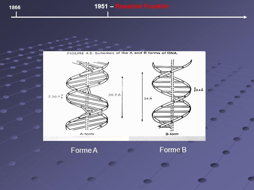 Forme A 1866 1951 – Rosalind Franklin Forme B
