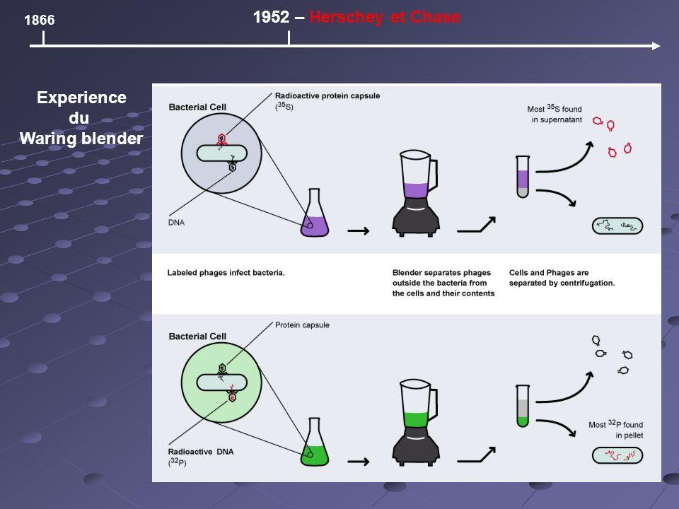 1866 1952 – Herschey et Chase Experience du Waring blender