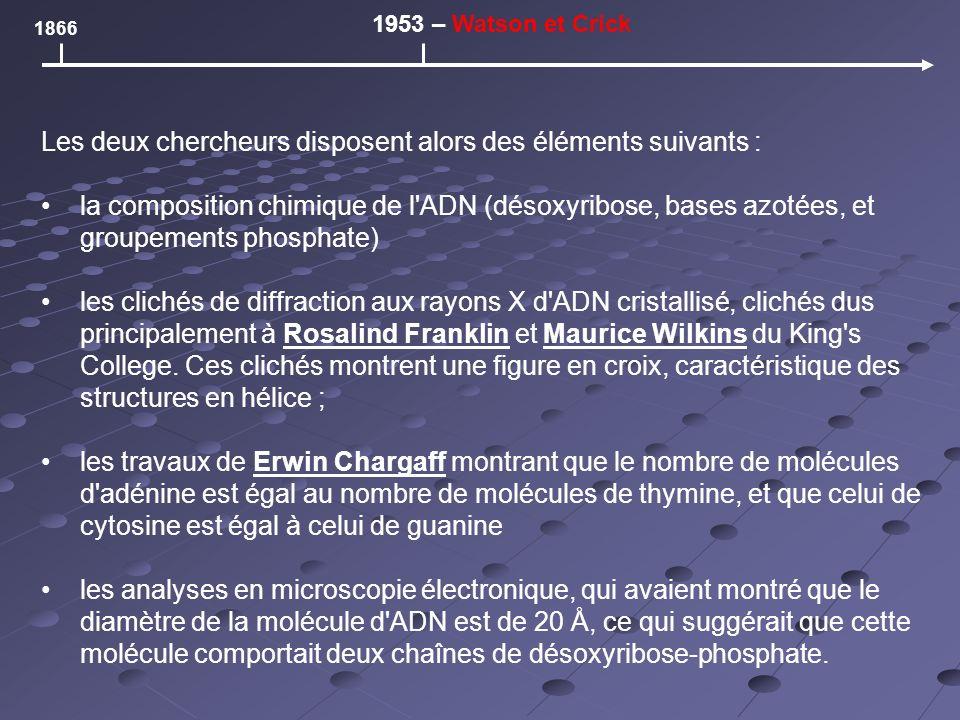 Les deux chercheurs disposent alors des éléments suivants : la composition chimique de l ADN (désoxyribose, bases azotées, et groupements phosphate) les clichés de diffraction aux rayons X d ADN cristallisé, clichés dus principalement à Rosalind Franklin et Maurice Wilkins du King s College.