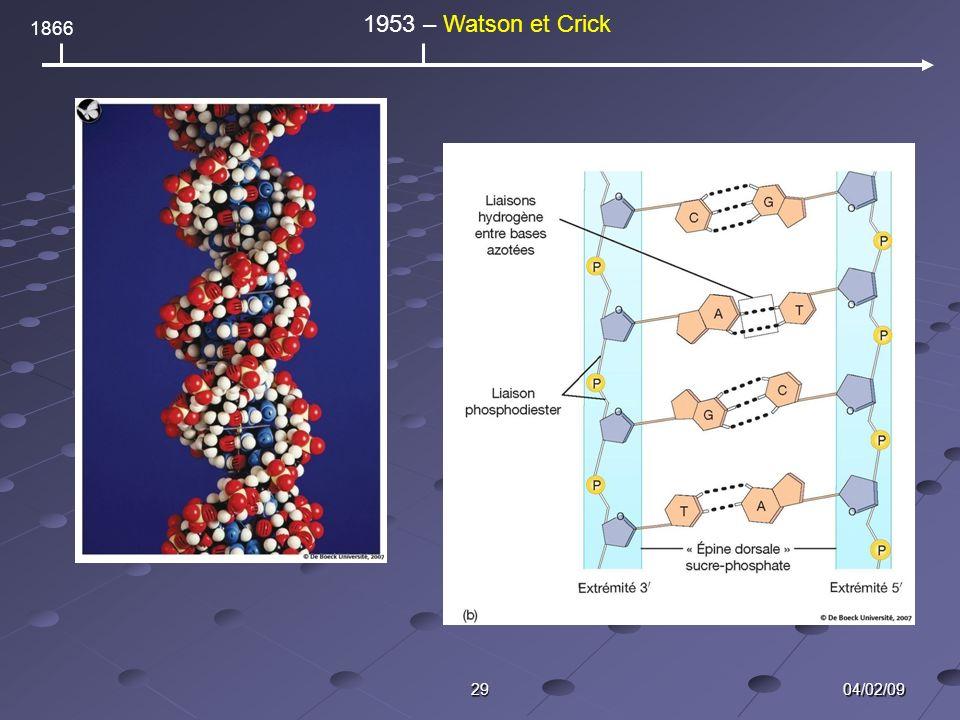 04/02/0929 1866 1953 – Watson et Crick