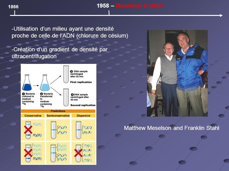 1866 1958 – Meselson et Stahl Matthew Meselson and Franklin Stahl -Utilisation dun milieu ayant une densité proche de celle de lADN (chlorure de césium) -Création dun gradient de densité par ultracentrifugation