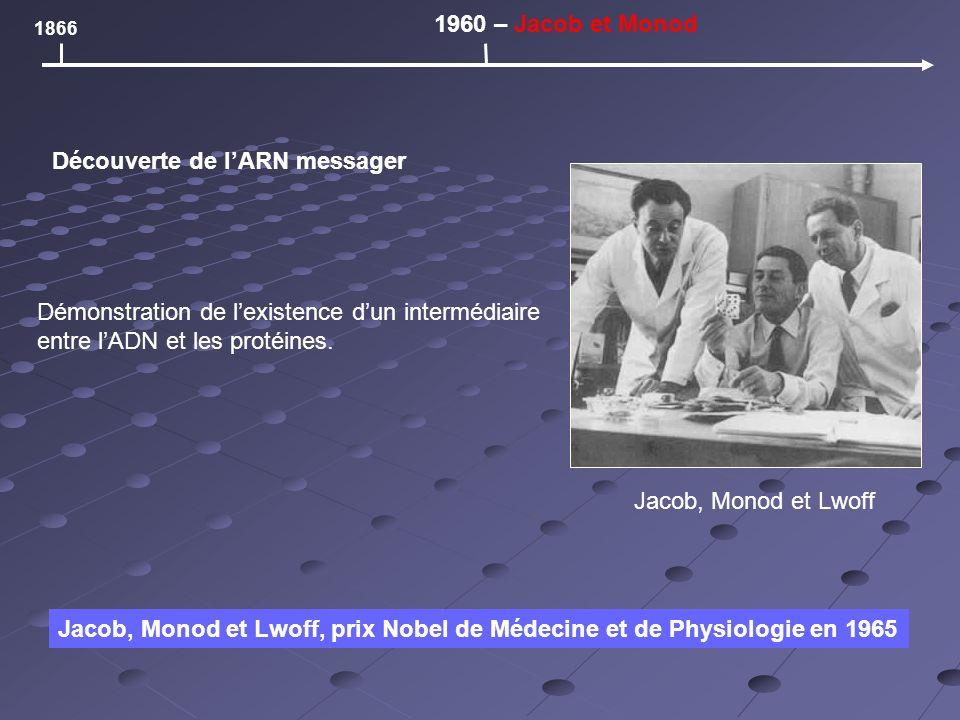 1866 1960 – Jacob et Monod Découverte de lARN messager Jacob, Monod et Lwoff, prix Nobel de Médecine et de Physiologie en 1965 Jacob, Monod et Lwoff Démonstration de lexistence dun intermédiaire entre lADN et les protéines.