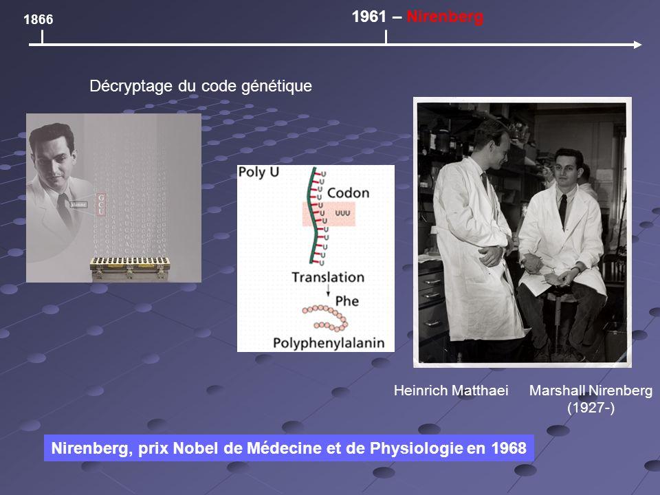 1866 1961 – Nirenberg Décryptage du code génétique Heinrich MatthaeiMarshall Nirenberg (1927-) Nirenberg, prix Nobel de Médecine et de Physiologie en 1968