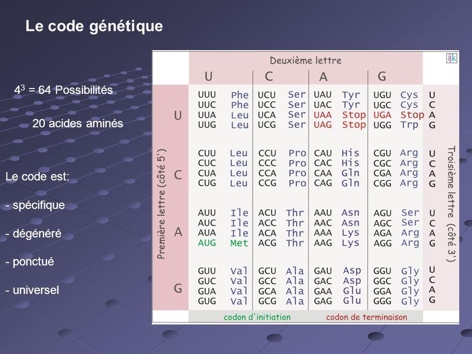Le code génétique 4 3 = 64 Possibilités 20 acides aminés Le code est: - spécifique - dégénéré - ponctué - universel