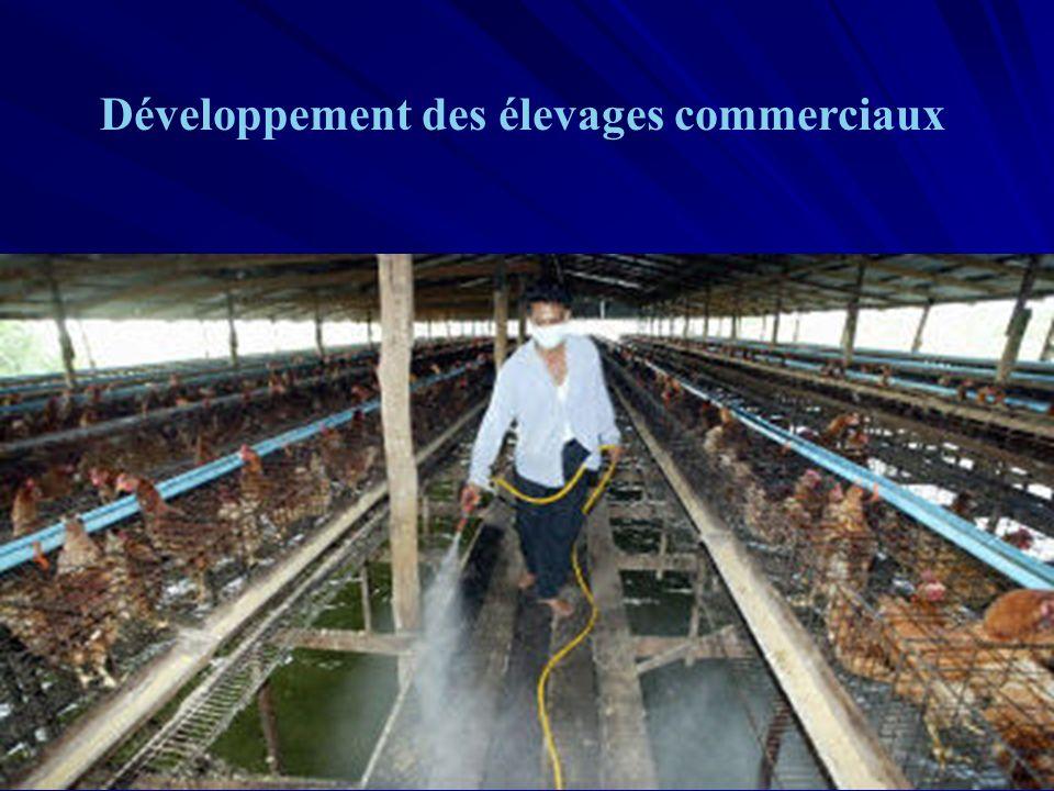 URML Ile-de-France 14 Développement des élevages commerciaux