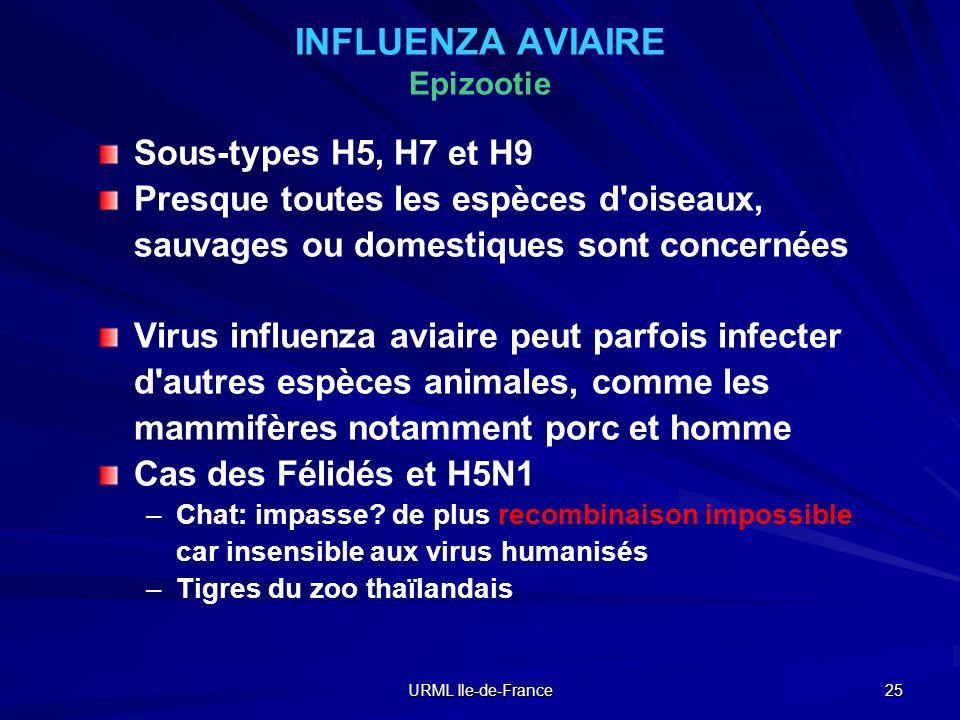 URML Ile-de-France 25 INFLUENZA AVIAIRE Epizootie Sous-types H5, H7 et H9 Presque toutes les espèces d'oiseaux, sauvages ou domestiques sont concernée