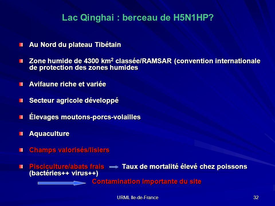 URML Ile-de-France 32 Lac Qinghai : berceau de H5N1HP? Au Nord du plateau Tibétain Zone humide de 4300 km 2 classée/RAMSAR (convention internationale