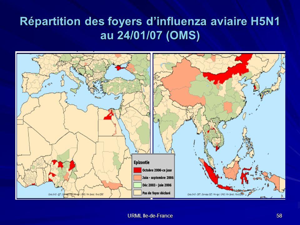 URML Ile-de-France 58 Répartition des foyers dinfluenza aviaire H5N1 au 24/01/07 (OMS)