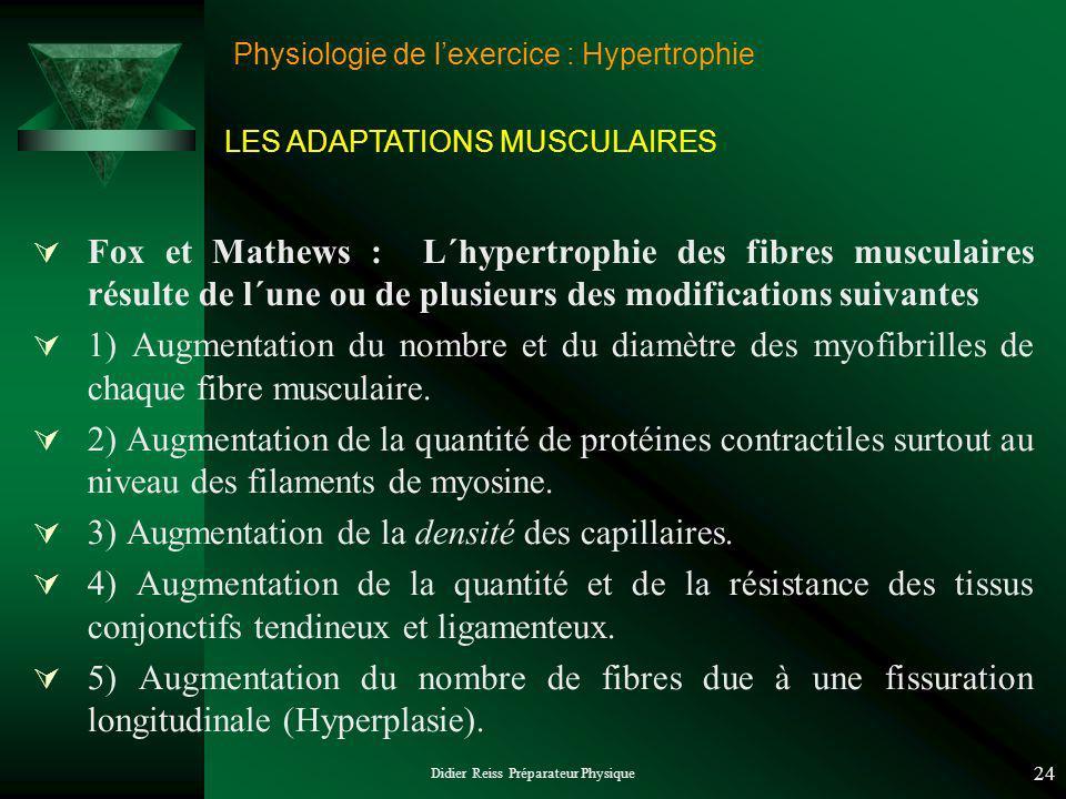 Didier Reiss Préparateur Physique 24 Physiologie de lexercice : Hypertrophie LES ADAPTATIONS MUSCULAIRES Fox et Mathews : L´hypertrophie des fibres mu