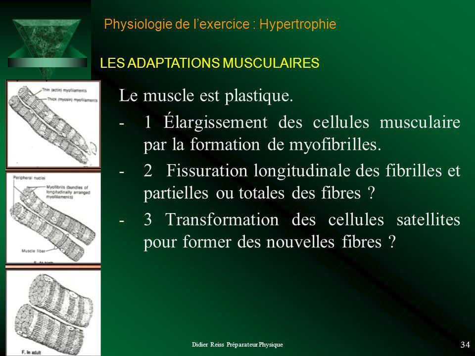 Didier Reiss Préparateur Physique 34 Physiologie de lexercice : Hypertrophie Le muscle est plastique. - 1 Élargissement des cellules musculaire par la