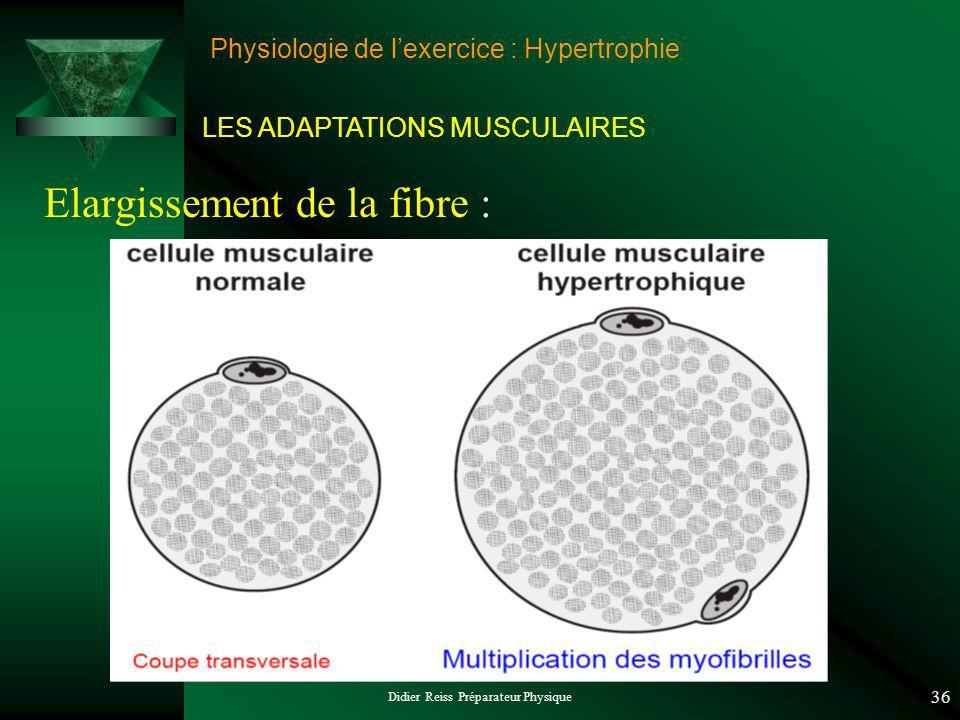 Didier Reiss Préparateur Physique 36 Physiologie de lexercice : Hypertrophie Elargissement de la fibre : LES ADAPTATIONS MUSCULAIRES