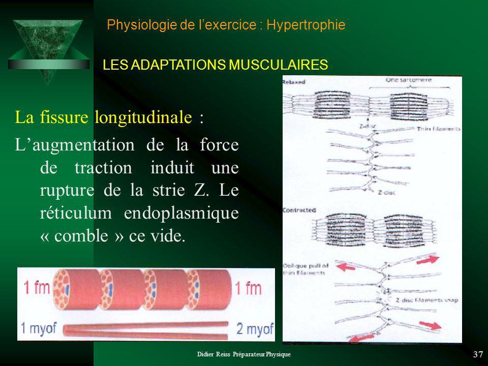 Didier Reiss Préparateur Physique 37 Physiologie de lexercice : Hypertrophie La fissure longitudinale : Laugmentation de la force de traction induit une rupture de la strie Z.