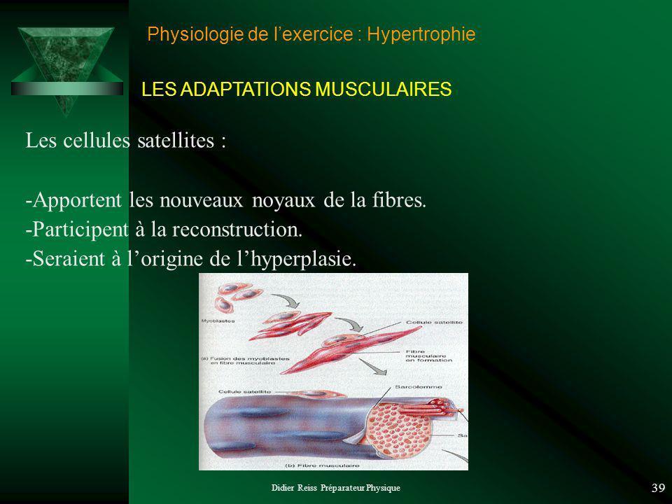 Didier Reiss Préparateur Physique 39 Physiologie de lexercice : Hypertrophie Les cellules satellites : -Apportent les nouveaux noyaux de la fibres.
