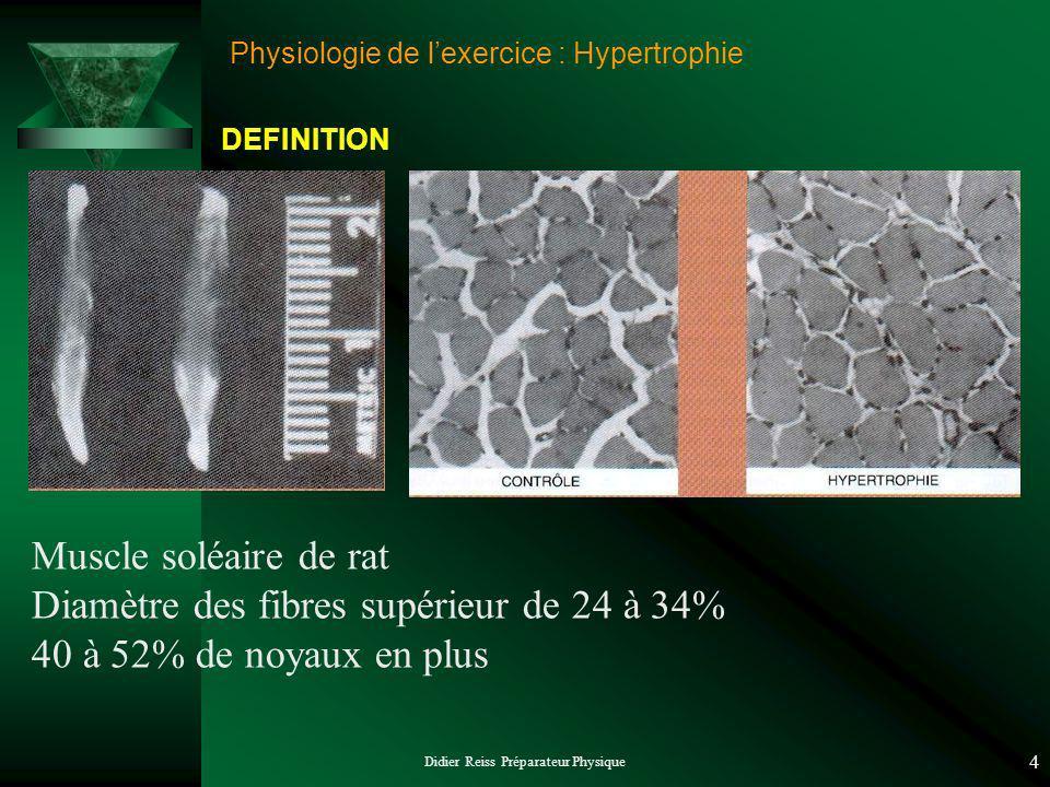 Didier Reiss Préparateur Physique 4 Physiologie de lexercice : Hypertrophie Muscle soléaire de rat Diamètre des fibres supérieur de 24 à 34% 40 à 52%