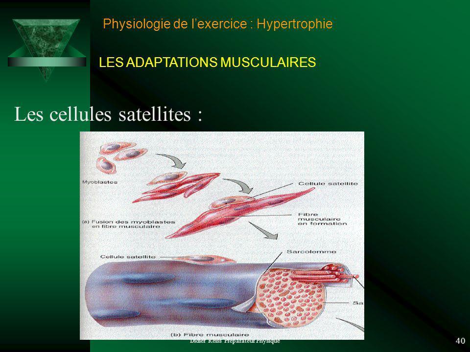 Didier Reiss Préparateur Physique 40 Physiologie de lexercice : Hypertrophie Les cellules satellites : LES ADAPTATIONS MUSCULAIRES