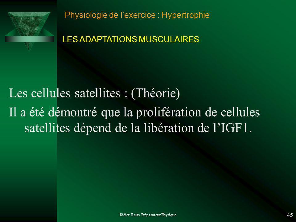 Didier Reiss Préparateur Physique 45 Physiologie de lexercice : Hypertrophie Les cellules satellites : (Théorie) Il a été démontré que la prolifération de cellules satellites dépend de la libération de lIGF1.