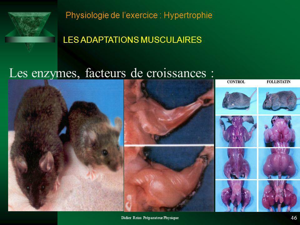 Didier Reiss Préparateur Physique 46 Physiologie de lexercice : Hypertrophie Les enzymes, facteurs de croissances : LES ADAPTATIONS MUSCULAIRES