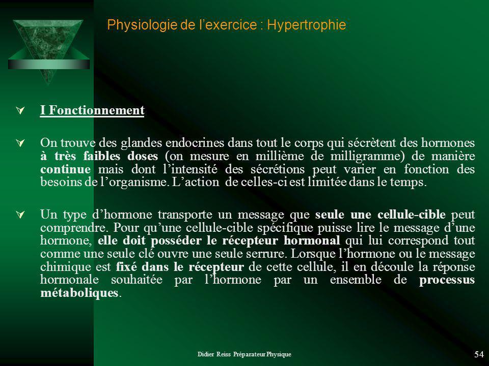 Didier Reiss Préparateur Physique 54 Physiologie de lexercice : Hypertrophie I Fonctionnement On trouve des glandes endocrines dans tout le corps qui
