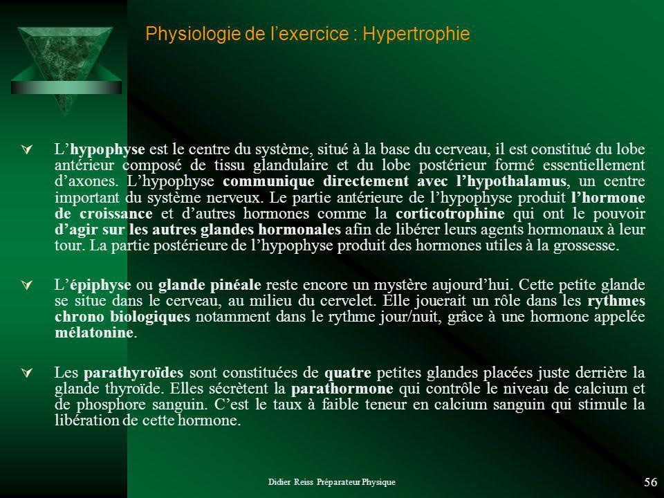 Didier Reiss Préparateur Physique 56 Physiologie de lexercice : Hypertrophie Lhypophyse est le centre du système, situé à la base du cerveau, il est constitué du lobe antérieur composé de tissu glandulaire et du lobe postérieur formé essentiellement daxones.