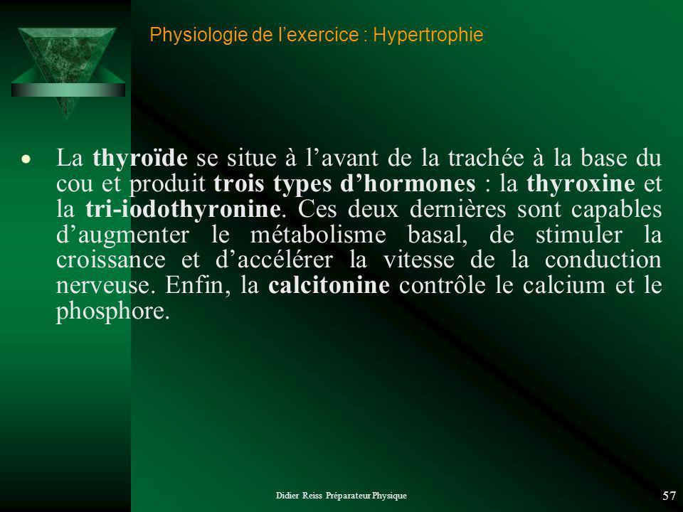 Didier Reiss Préparateur Physique 57 Physiologie de lexercice : Hypertrophie La thyroïde se situe à lavant de la trachée à la base du cou et produit trois types dhormones : la thyroxine et la tri-iodothyronine.