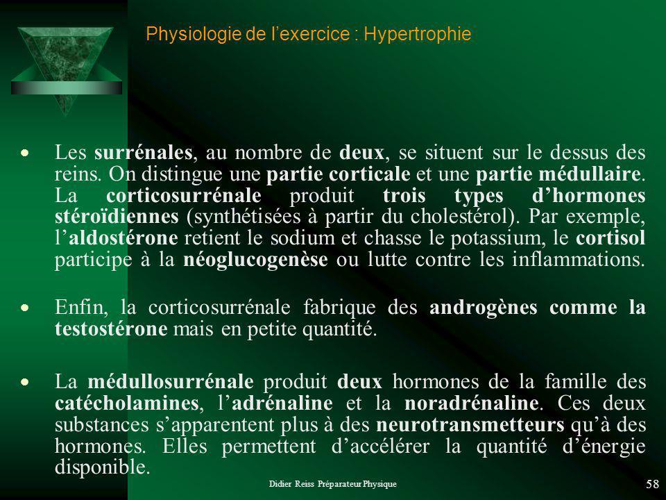 Didier Reiss Préparateur Physique 58 Physiologie de lexercice : Hypertrophie Les surrénales, au nombre de deux, se situent sur le dessus des reins.