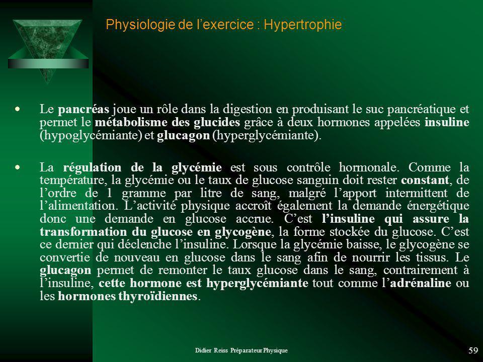 Didier Reiss Préparateur Physique 59 Physiologie de lexercice : Hypertrophie Le pancréas joue un rôle dans la digestion en produisant le suc pancréatique et permet le métabolisme des glucides grâce à deux hormones appelées insuline (hypoglycémiante) et glucagon (hyperglycémiante).