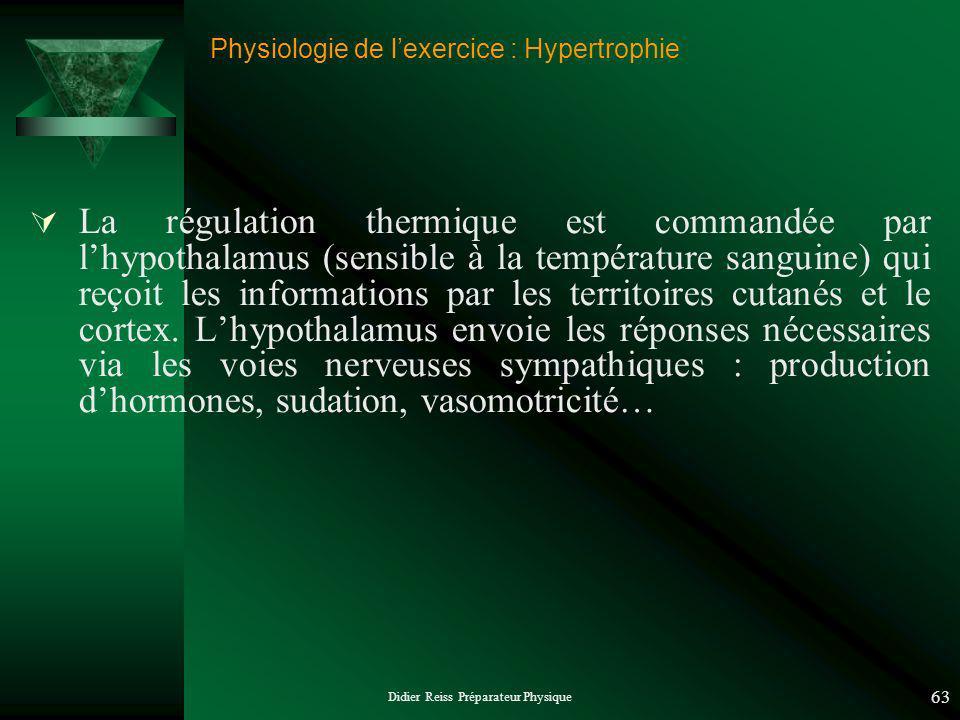 Didier Reiss Préparateur Physique 63 Physiologie de lexercice : Hypertrophie La régulation thermique est commandée par lhypothalamus (sensible à la température sanguine) qui reçoit les informations par les territoires cutanés et le cortex.