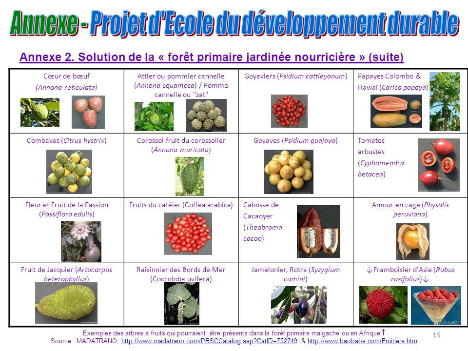 16 Annexe 2. Solution de la « forêt primaire jardinée nourricière » (suite) Cœur de bœuf (Annona reticulata) Attier ou pommier cannelle (Annona squamo