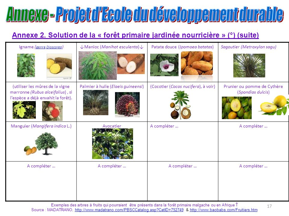 17 Annexe 2. Solution de la « forêt primaire jardinée nourricière » (°) (suite) Igname ( genre Dioscorea ) genreDioscoreaManioc (Manihot esculenta)Pat